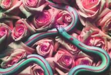 EP156﹕圖騰﹕花與蛇