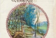 言靈奧祕EP209﹕煉金﹕羊春之書前傳1,AG﹕百變小櫻